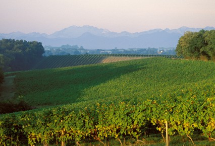 1- HD_Armagnac_Vignes_e_ _Pyrenees (2)